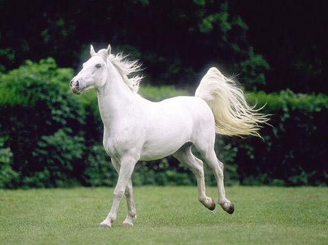 Mis amores los caballos Img23348_page