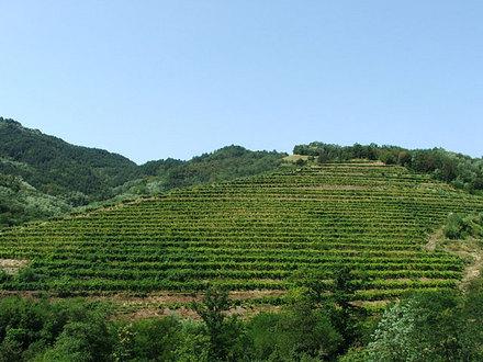 Cantina di vini Uršič, Vipava
