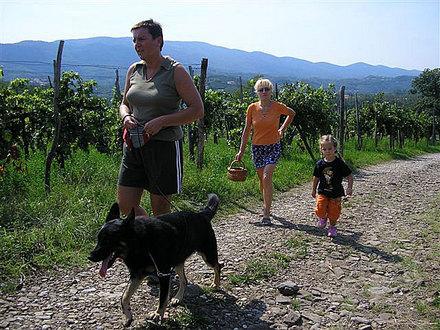 Platz - haltestelle für wohnmobil und Campingplatz Saksida, Severna Primorska