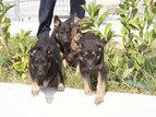 Hotel za pse in zavetišče za hišne živali Oskar Vitovlje, Severna Primorska