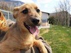 Hotel per cani ed asilo per animali domestici Oskar Vitovlje, Severna Primorska