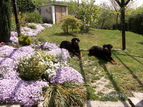 Hotel for dogs Kekec, Nova Gorica